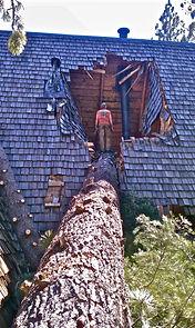 emergency tree services seattle, tree removal seattle, ballard tree service