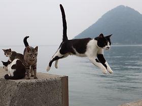 佐柳島での飛び猫