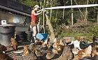 Root 'N Roost Farm - Kale
