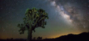 Joshua_tree_night_web-0371.jpg