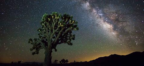 Joshua_tree_night_web-0371.jpg