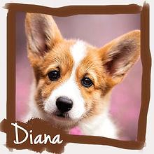 diana-for-web.jpg