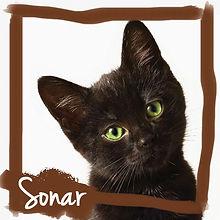 sonar-for-web.jpg