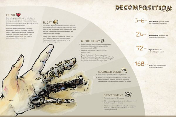 Infographic of Decomposition
