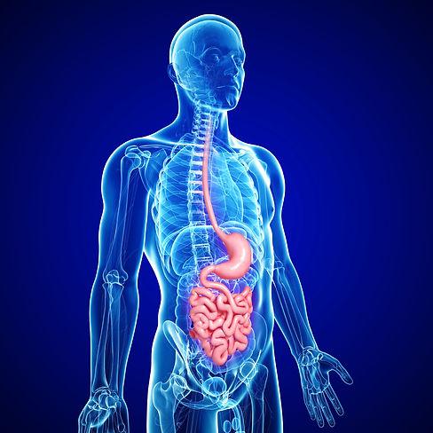 digestive_body_image-istock_000021657334