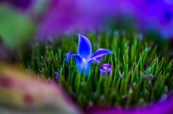 Bromeliads Darwin