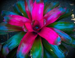 bromeliads again 6