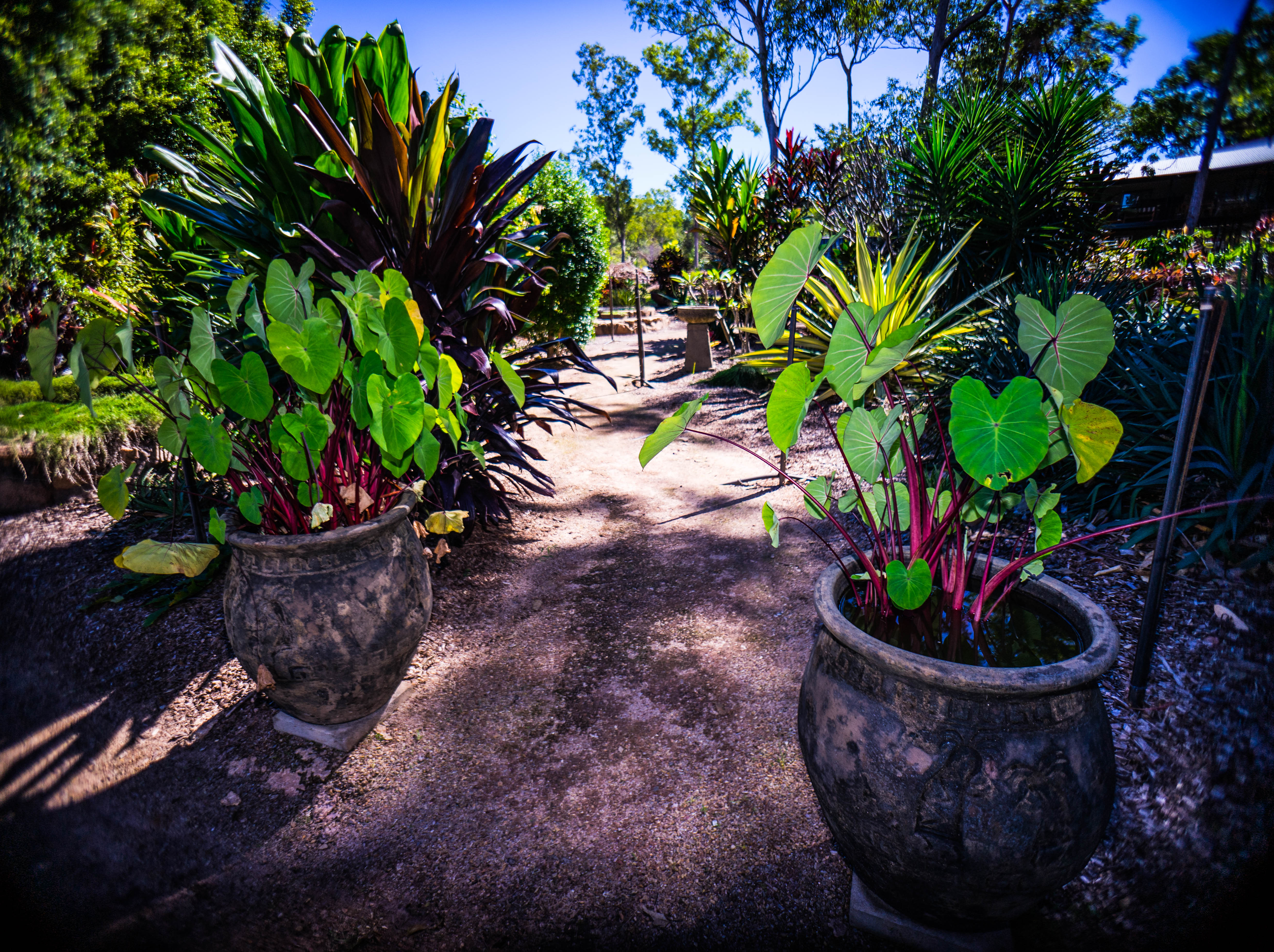 Darwin plant nursery