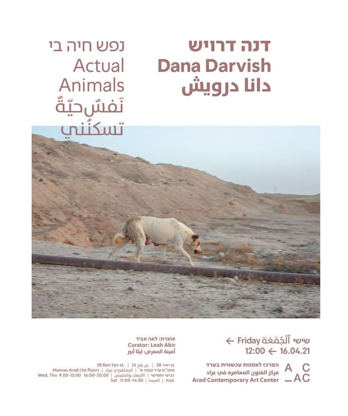"""Invitation: """"Actual Animals"""". Solo exhibition at Arad Contemporary Art Center"""