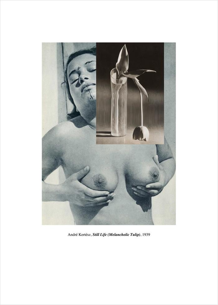 Untitled (André Kertész, Still Life (Melancholic Tulip), 1939) Montage, 42x32cm, 2014