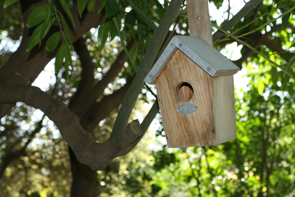 birdhouse in nature
