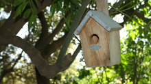 Kids Keep the House After Mom and Dad Divorce? Bird Nesting Custody is Real.