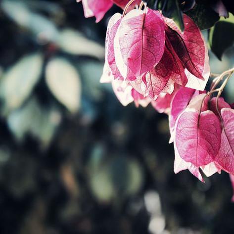 beautiful-1867948__480.jpg