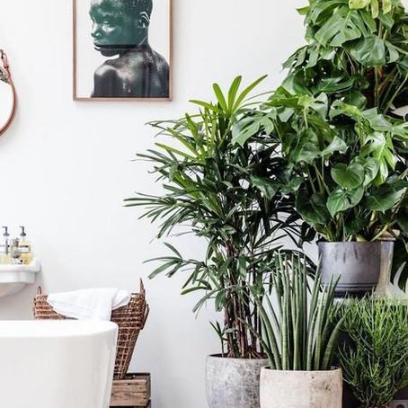 La décoration par les plantes