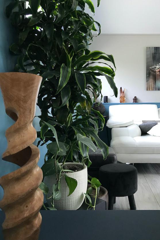 Plante verte dans salon contemporain