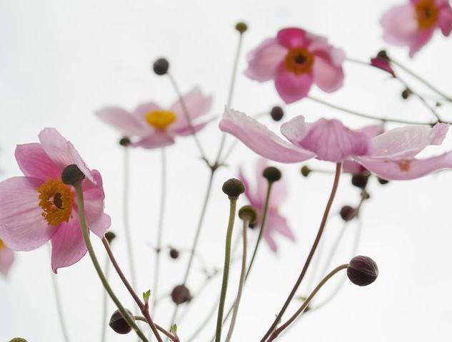 blossom-215565__480.jpg