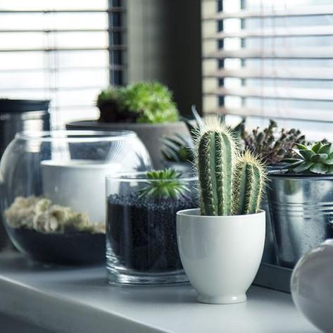 pots-716579__480.jpg