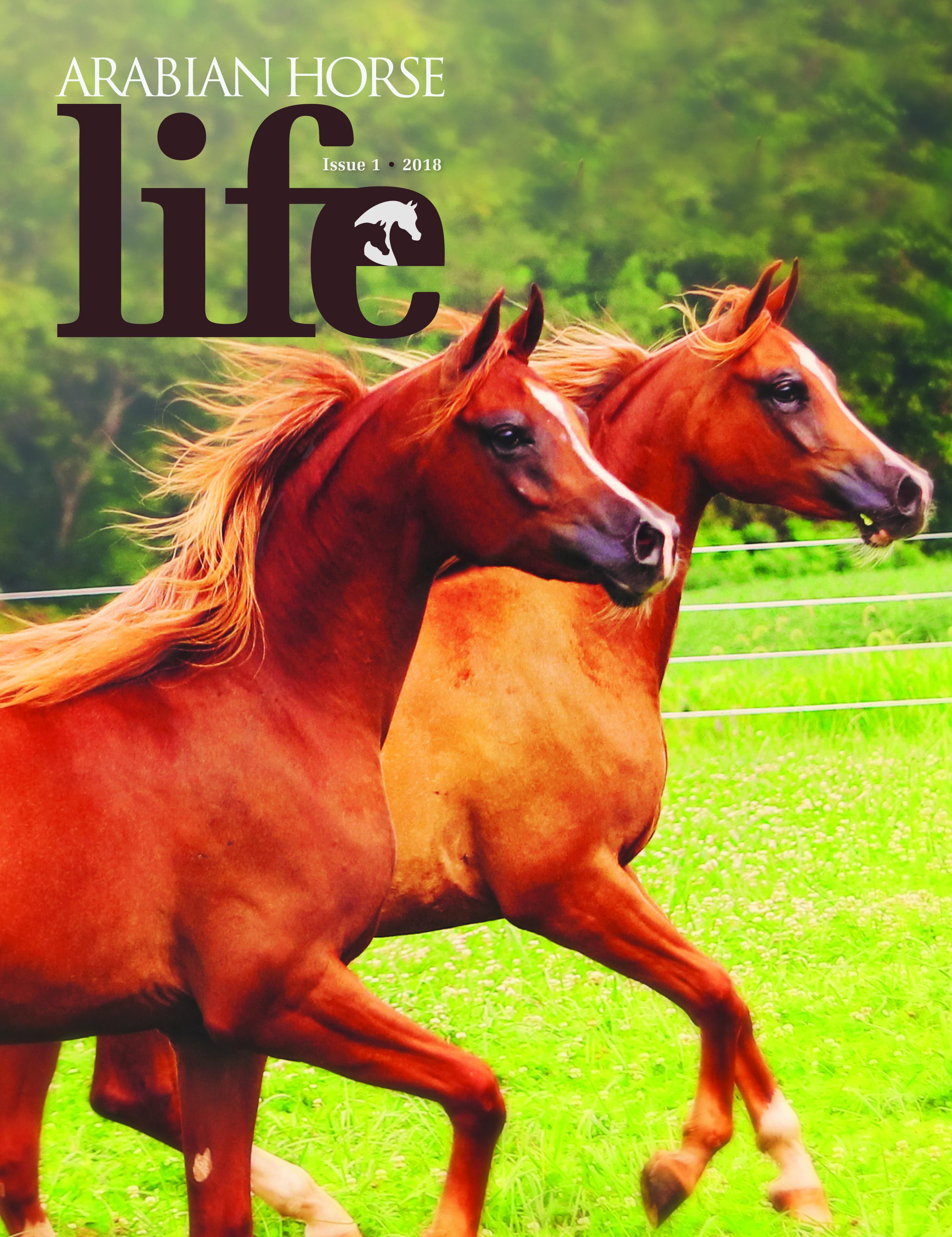 FC-i1 18 COVER