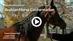 Arabian Horse Conformation - PREVIEW VIDEO
