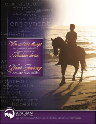 The Arabian Horse Association Launches #JoinTheJourney Campaign