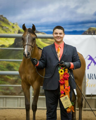 Colorado Arabian Breeders Alliance