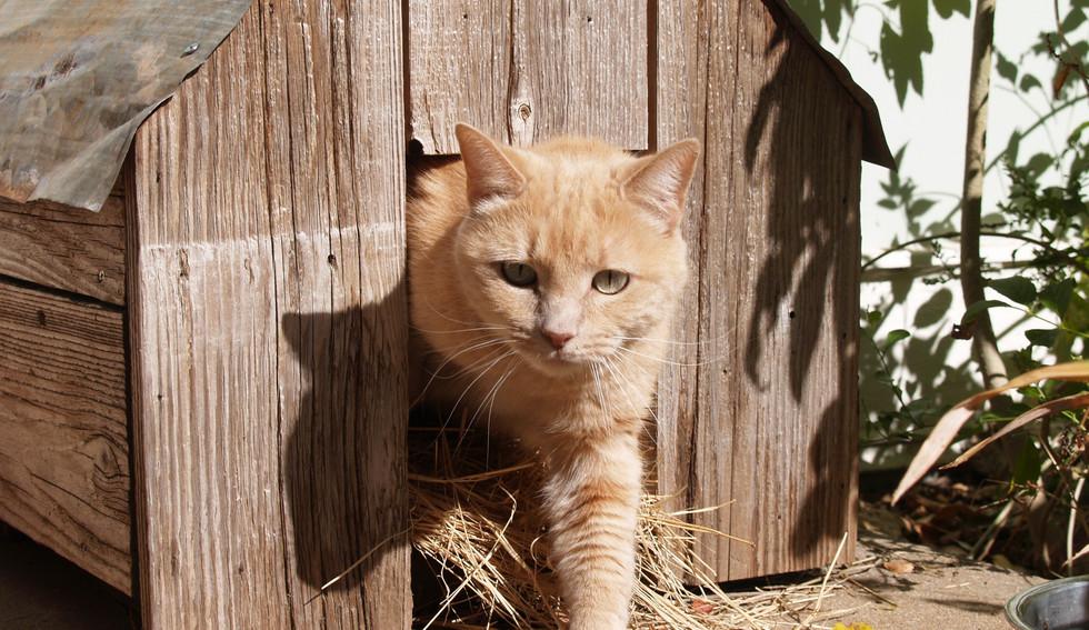 041_Cat House.jpg