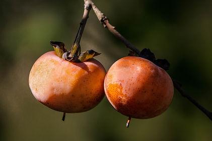 wild-persimmon-1727097_1920.jpg