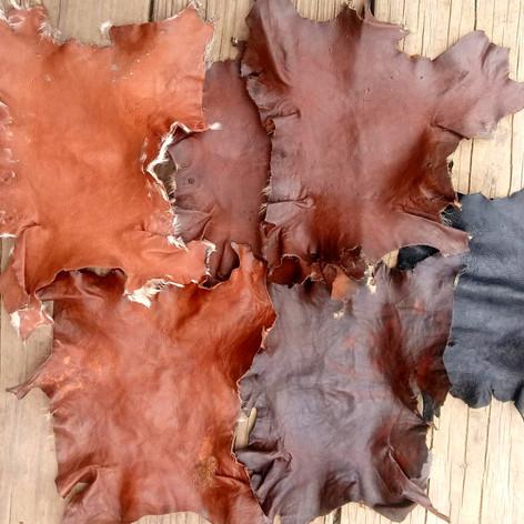 Four different kinds of tannins (& five different colors) on squirrel leather. Clockwise from top left: Sea grape tree (Coccoloba uvifera), black oak (Quercus velutina), black oak, iron dyed Sea Grape, hemlock (Tsuga canadensis), & white oak (Quercus alba).