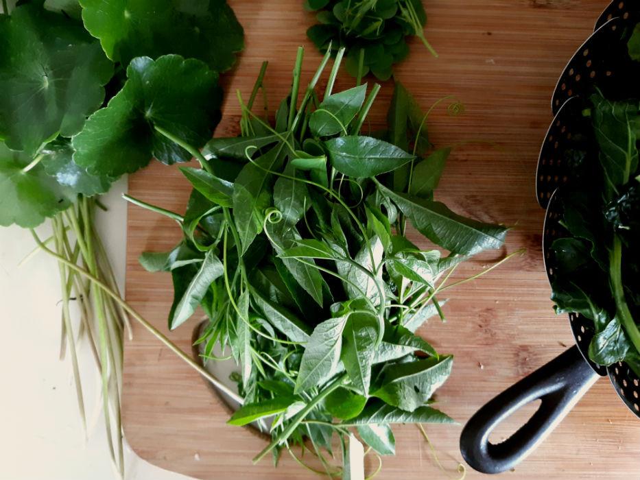 Passionflower Passiflora incarnata greens shoots meristematic tips wild edible plants of Florida