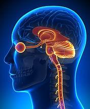 how-brainspotting-works_edited.jpg