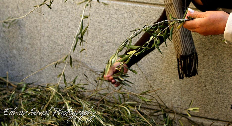 Edwar Simal Photography-08576.jpg