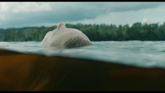 Ester - En långfilmspilot om Ester Bauer