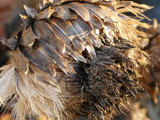 Story of a seed-head