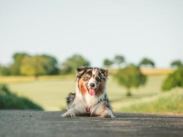 Hunde-Shooting - Von der Planung bis zu den finalen Fotos