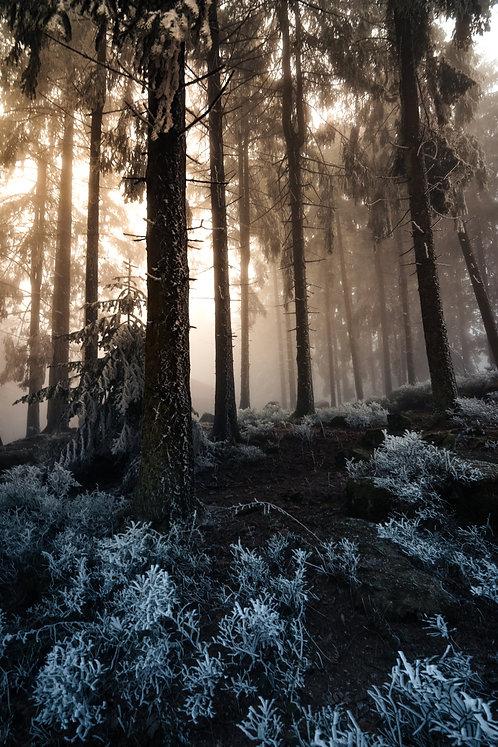 """Schwarzwald """"Frost + Licht"""""""