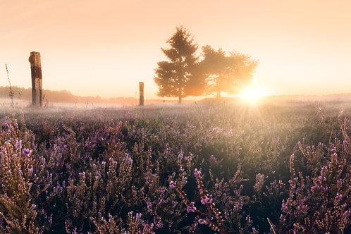 "Sunrise ""Heide"""