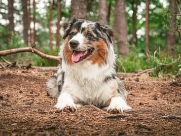 Hundefotografie mit welchen Objektiven?