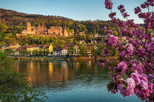 "Heidelberg ""Kirschblüte"""