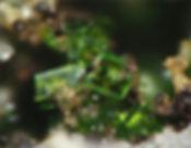 cristallo.jpg