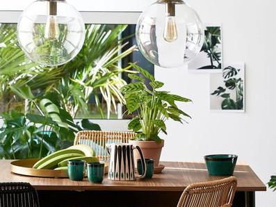 גידול צמחים בבית במינימום זמן ובמקסימום הנאה