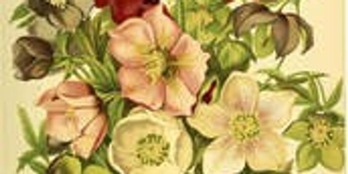 2daagse workshop botanisch tekenen - zomerbloeiers (5 + 12/8)