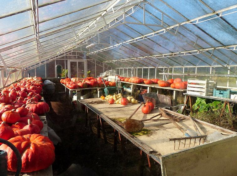 de kweekserre van groentemuseum 't GROM