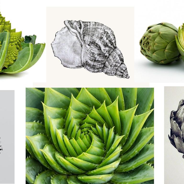 2-daagse workshop botanisch tekenen 'Spiraalvormen in de natuur' (6 en 7/10)
