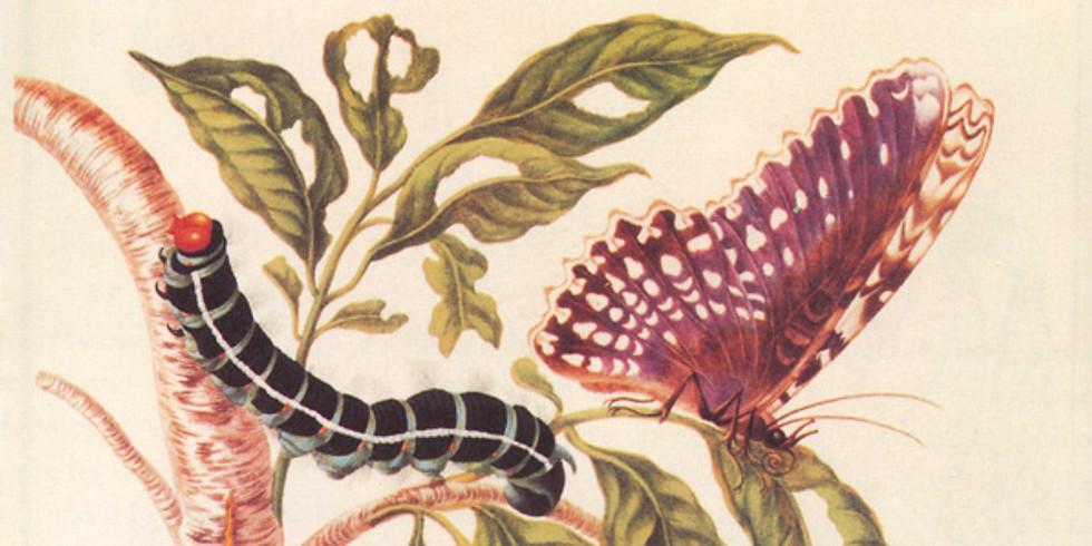 ONLINE 2daagse workshops botanisch tekenen - vlinders voor beginners en gevorderden