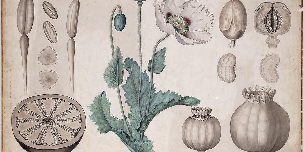 Digitale versie 2daagse workshops botanisch tekenen - zaaddozen voor beginners en gevorderden
