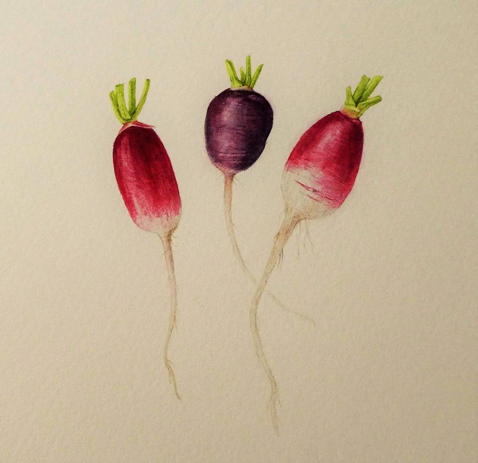 4daagse Workshop botanisch tekenen/aquarel - lentebloeiers en lentegroenten voor beginners en gevorderden