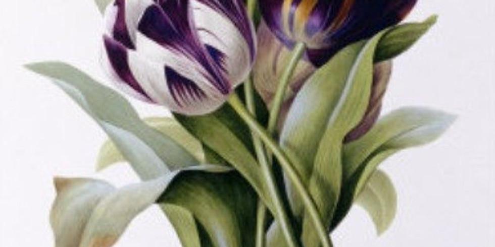 ONLINE 2-daagse workshop botanisch tekenen 'Tulpen' (24 en 25/03)