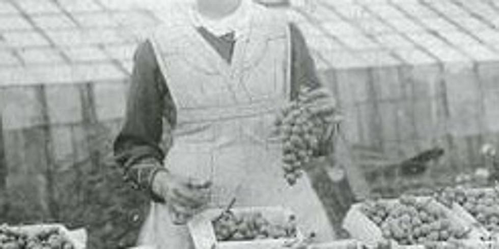Soirée MuZe: de tuinbouwpioniers van het Mechelse (live én online)