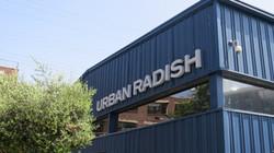 Urban Radish  (10)
