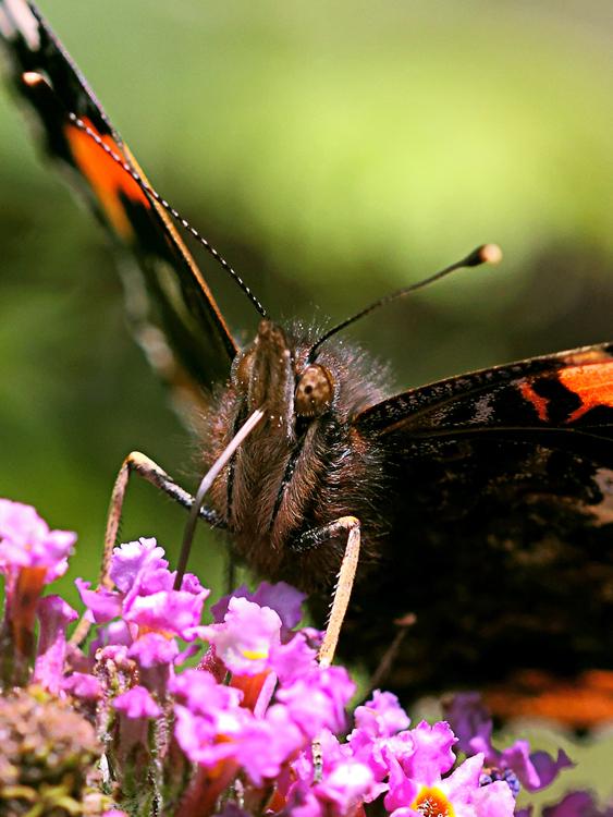 01 Butterfly feeding.jpg